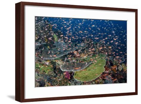 Indonesia, Alor Island. Coral Reef Scenic-Jaynes Gallery-Framed Art Print
