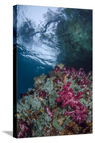 Indonesia, West Papua, Raja Ampat. Coral Reef Scenic-Jaynes Gallery-Stretched Canvas Print