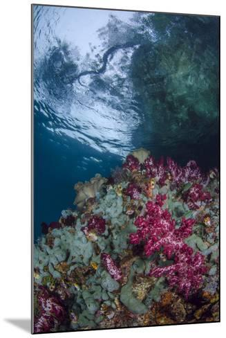 Indonesia, West Papua, Raja Ampat. Coral Reef Scenic-Jaynes Gallery-Mounted Photographic Print