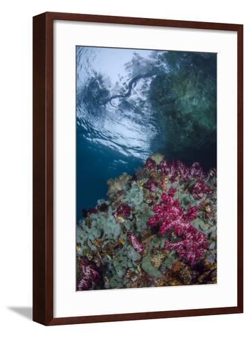 Indonesia, West Papua, Raja Ampat. Coral Reef Scenic-Jaynes Gallery-Framed Art Print