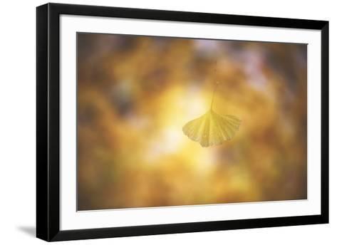 Golden Morning-Philippe Sainte-Laudy-Framed Art Print