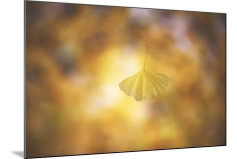 Golden Morning-Philippe Sainte-Laudy-Mounted Photographic Print