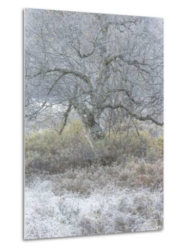 Another Winter-Doug Chinnery-Metal Print