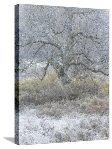 Another Winter-Doug Chinnery-Stretched Canvas Print