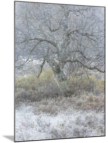 Another Winter-Doug Chinnery-Mounted Photographic Print