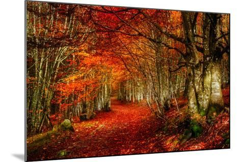 Reality and Dream-Philippe Sainte-Laudy-Mounted Photographic Print