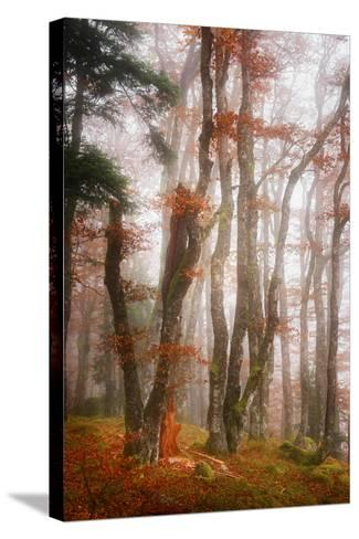 Let's Get Lost-Philippe Sainte-Laudy-Stretched Canvas Print