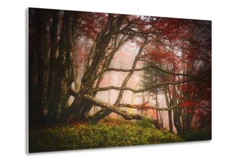 Mysterious Wood-Philippe Sainte-Laudy-Metal Print