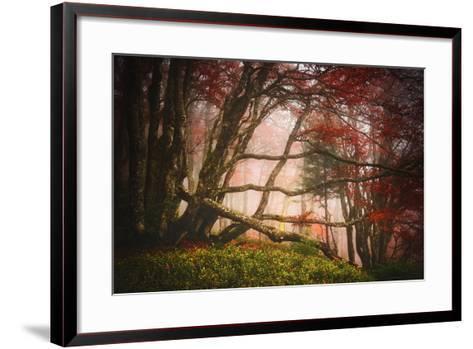 Mysterious Wood-Philippe Sainte-Laudy-Framed Art Print