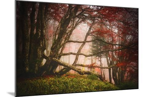 Mysterious Wood-Philippe Sainte-Laudy-Mounted Photographic Print