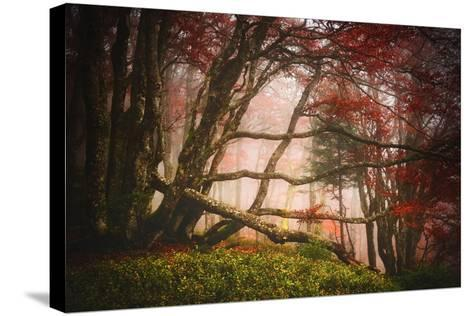 Mysterious Wood-Philippe Sainte-Laudy-Stretched Canvas Print