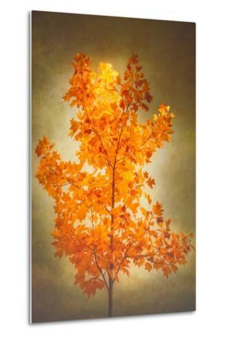 Textured Autumn-Philippe Sainte-Laudy-Metal Print
