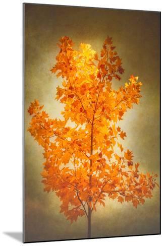 Textured Autumn-Philippe Sainte-Laudy-Mounted Photographic Print