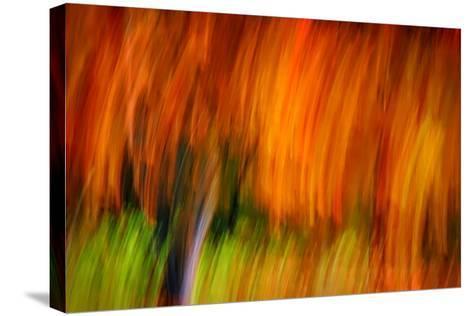 Shaggy Fall-Ursula Abresch-Stretched Canvas Print