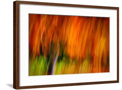 Shaggy Fall-Ursula Abresch-Framed Art Print