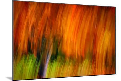 Shaggy Fall-Ursula Abresch-Mounted Photographic Print