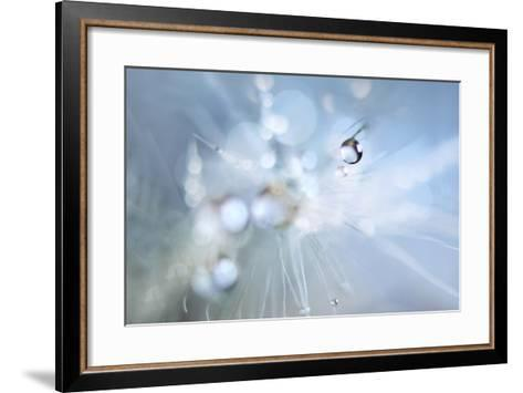 Seed Fireworks-Heidi Westum-Framed Art Print