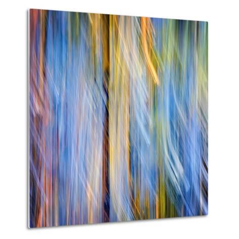 Pines-Ursula Abresch-Metal Print