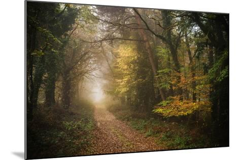 Path in Autumn Forest-Philippe Manguin-Mounted Photographic Print