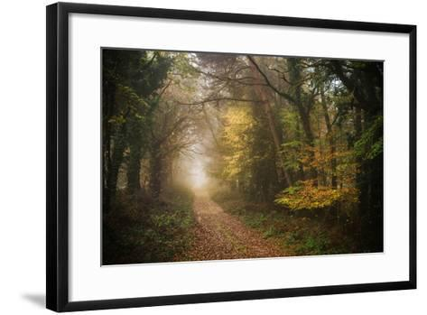Path in Autumn Forest-Philippe Manguin-Framed Art Print