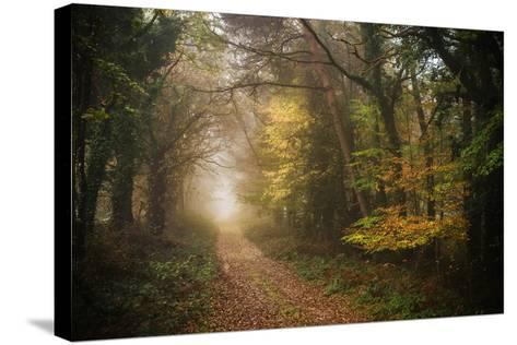 Path in Autumn Forest-Philippe Manguin-Stretched Canvas Print