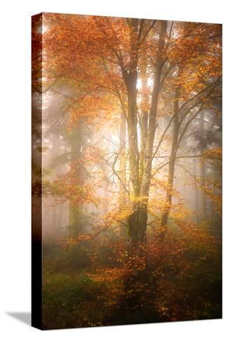 Alone in the Fog-Philippe Sainte-Laudy-Stretched Canvas Print