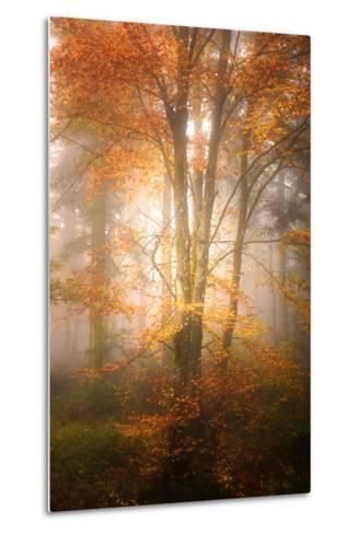Alone in the Fog-Philippe Sainte-Laudy-Metal Print