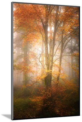 Alone in the Fog-Philippe Sainte-Laudy-Mounted Photographic Print