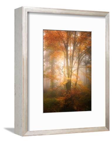 Alone in the Fog-Philippe Sainte-Laudy-Framed Art Print