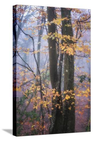 Season Details-Philippe Manguin-Stretched Canvas Print