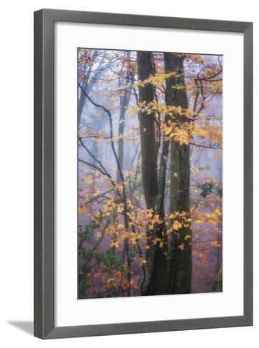 Season Details-Philippe Manguin-Framed Art Print