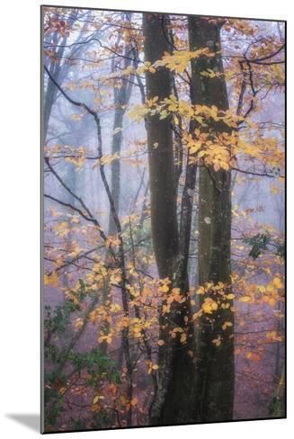 Season Details-Philippe Manguin-Mounted Photographic Print