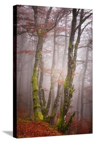 Forest Fog-Philippe Sainte-Laudy-Stretched Canvas Print