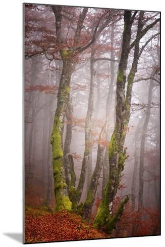 Forest Fog-Philippe Sainte-Laudy-Mounted Photographic Print