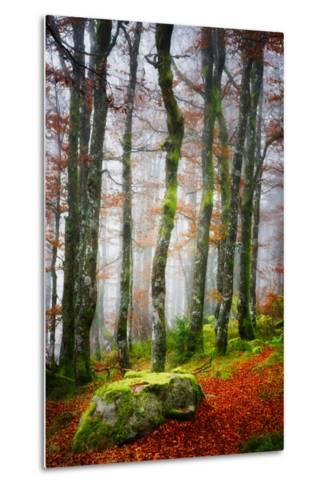 Forest Trail-Philippe Sainte-Laudy-Metal Print