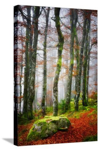 Forest Trail-Philippe Sainte-Laudy-Stretched Canvas Print