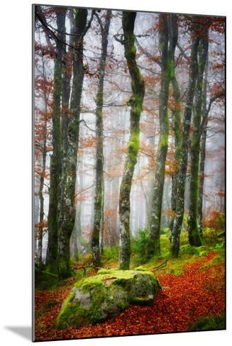 Forest Trail-Philippe Sainte-Laudy-Mounted Photographic Print