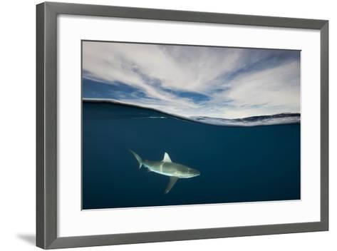 A Grey Reef Shark Swims in Kimbe Bay-David Doubilet-Framed Art Print