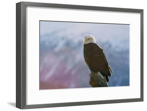 A Portrait of an American Bald Eagle, Haliaeetus Leucocephalus-Norbert Rosing-Framed Art Print