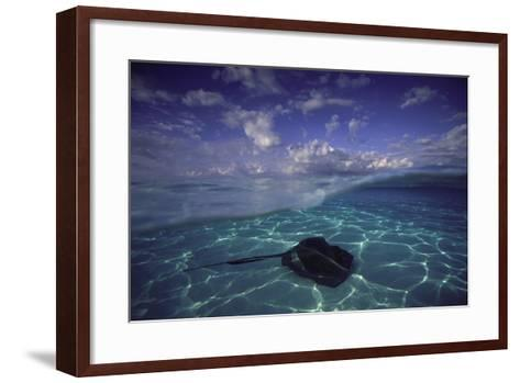 A Split Level View of a Southern Stingray Resting on the Sea Floor, with Puffy Clouds Overhead-David Doubilet-Framed Art Print