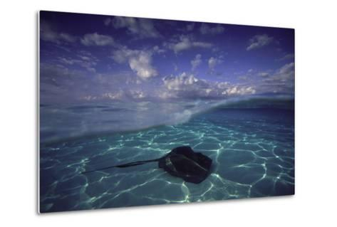 A Split Level View of a Southern Stingray Resting on the Sea Floor, with Puffy Clouds Overhead-David Doubilet-Metal Print