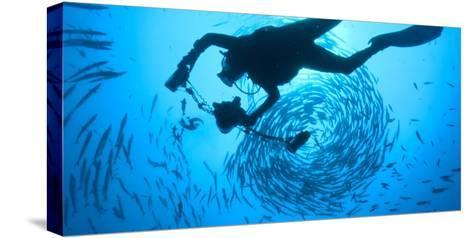 Photographer David Doubilet Swims in the Pacific Reef at Kimbe Bay-David Doubilet-Stretched Canvas Print