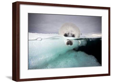 From a Greatly Diminished Ice Pack, a Harp Seal Pup Watches its Mother Swim Underwater-David Doubilet-Framed Art Print