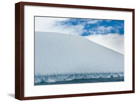 An Adelie Penguin, Pygoscelis Adeliae, Atop an Ice Hill at its Rookery-David Doubilet-Framed Art Print
