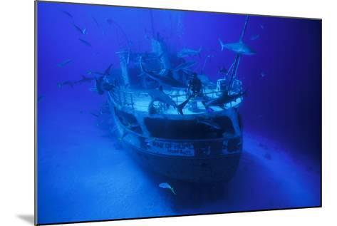 A Person on the Ray of Hope Shipwreck with Caribbean Reef Sharks, Carcharhinus Perezi, Circling-David Doubilet-Mounted Photographic Print