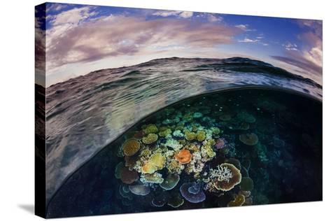 Opal Reef Off the Great Barrier Reef-David Doubilet-Stretched Canvas Print