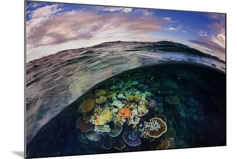 Opal Reef Off the Great Barrier Reef-David Doubilet-Mounted Photographic Print