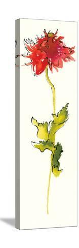 Peony Form Poppies III-Shirley Novak-Stretched Canvas Print