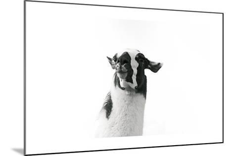 Lovable Llama I-Laura Marshall-Mounted Art Print