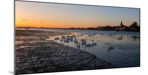 A View of Bosham Harbour in West Sussex-Chris Button-Mounted Photographic Print